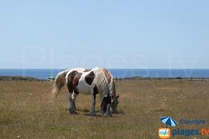 France: Bangor and Locmaria, Belle-Ile's Wild Side