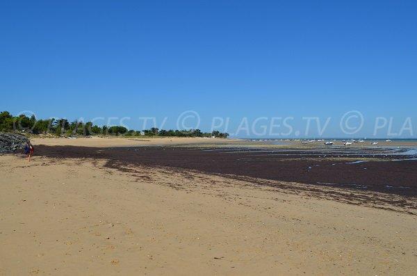 Anse de Fourneau avec vue sur la plage de la Loge - Les Portes en Ré