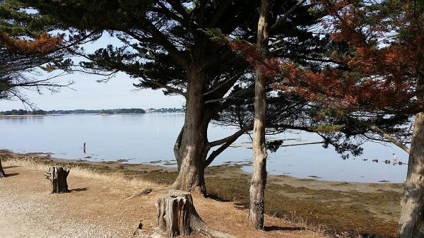 Les parcs à huitres sur l'ile d'Arz