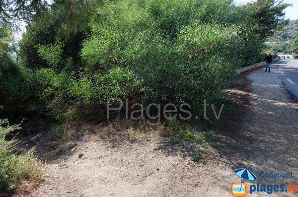 Chemin d'accès à la calanque