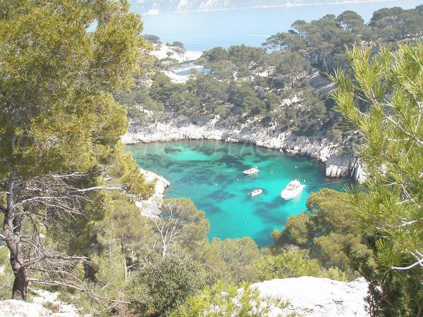 Calanque of Port-Pin in Cassis Marseille in France
