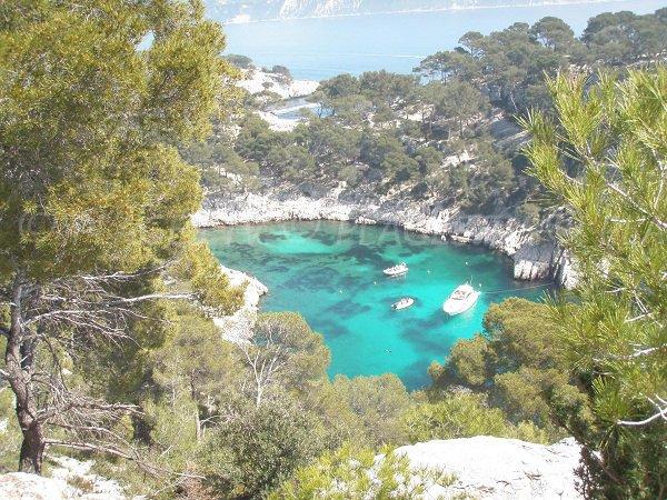 Foto della Calanque di Port-Pin a Cassis Marsiglia