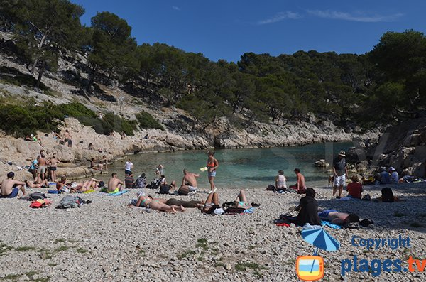 Beach in the calanque of Port Pin - France
