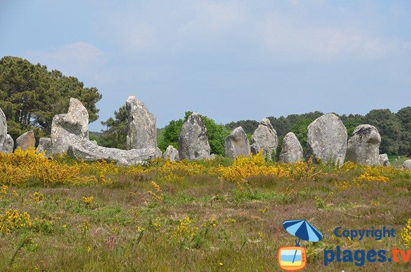 Menhirs de Carnac en Bretagne