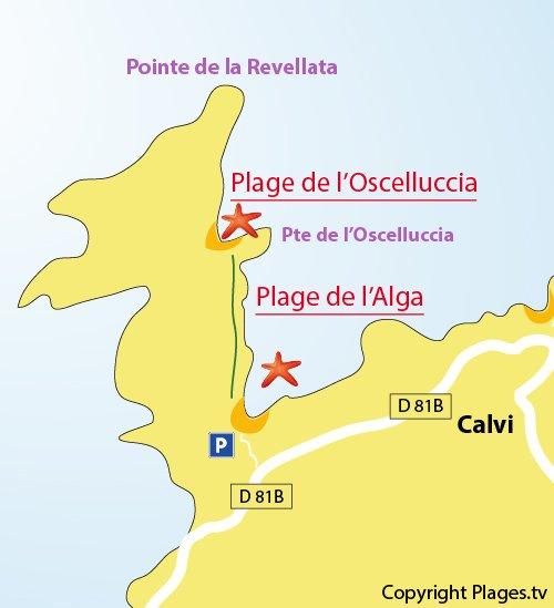 Carte de la plage de l'Alga à Calvi