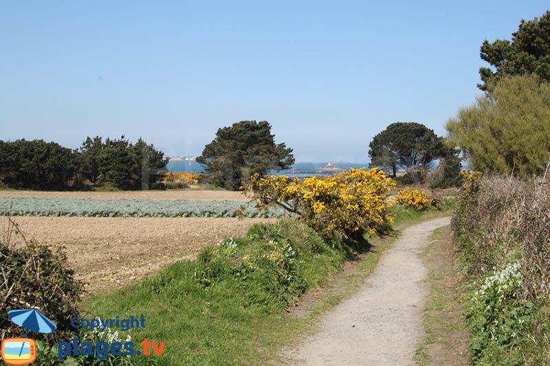 Chemin dans le nord de l'ile Callot avec des champs