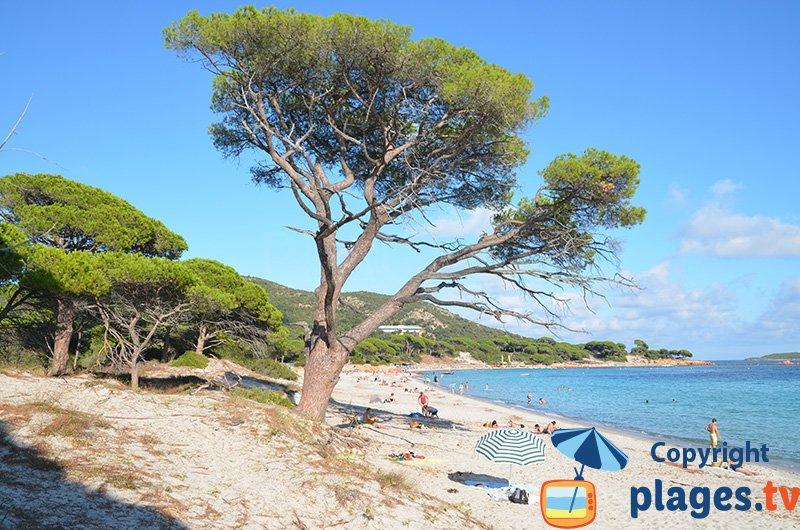 Palombaggia : l'une des plus belles plages en Corse