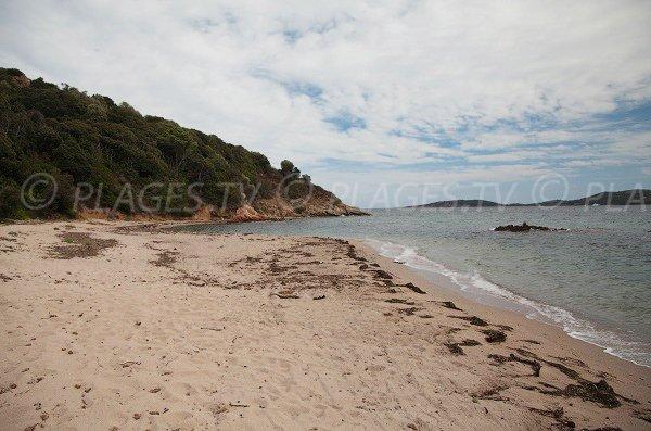 Plage de sable sur la presqu'ile de Benedettu