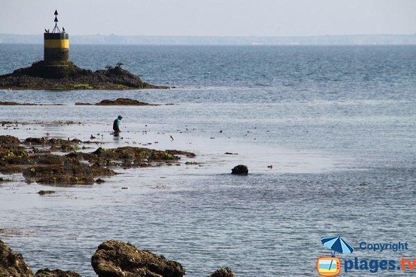 Ormeaux à Belle Ile en Mer