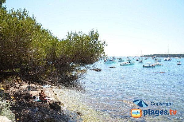 Photo of Cattats cove on Lérins island - Ste Marguerite