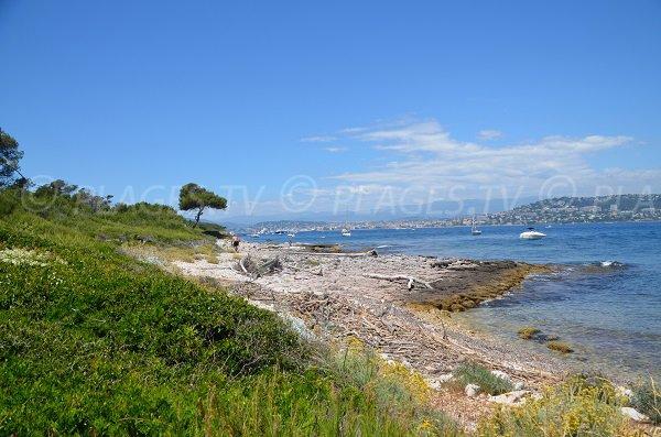 Plage de la Convention sur les Iles de Lérins avec vue sur Cannes