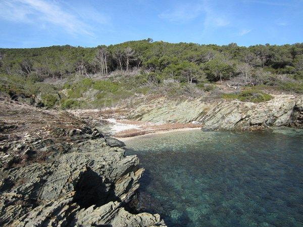 Cricca Selvaggio sull'isola di Porquerolles