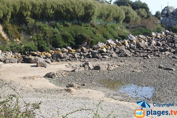 Secret beach in Roscoff - Exotic garden