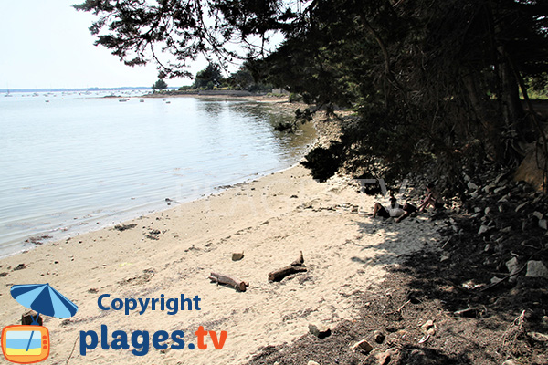Crique ombragée sur l'ile d'Arz