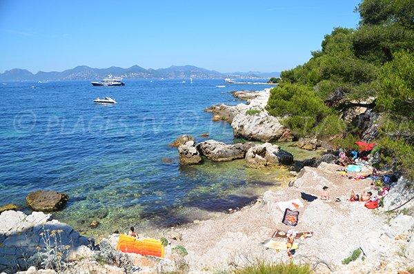 Laoute cove on Sainte Marguerite island (Lérins) - Cannes