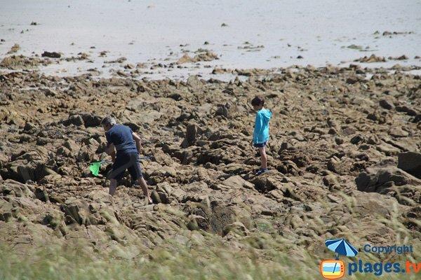 Pêche à pied sur l'ile de Sieck