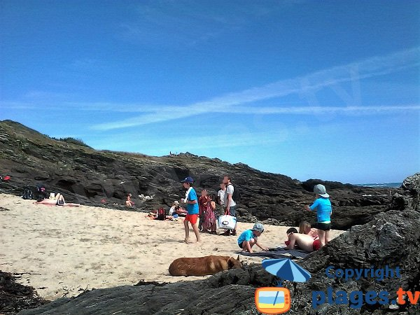 Dogs on the Groix island