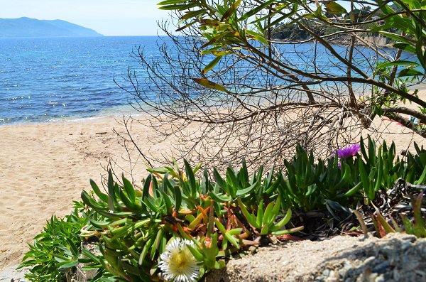 Végétation autour de la plage de Tiuccia