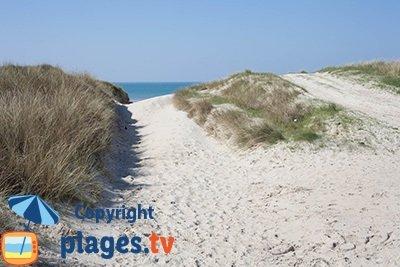 Dunes de Bretteville sur Ay dans la Manche
