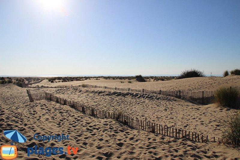 Dunes de la plage de l'Espiguette en Camargue