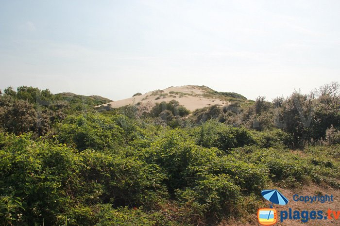 Dunes of slack in North of France