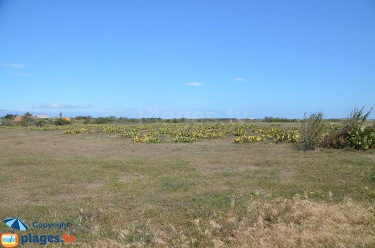 Environnement de la plage de Torreilles vers le nord