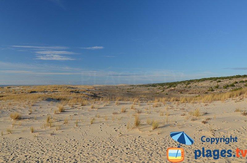 Espace dunaire au sud de Pyla sur Mer