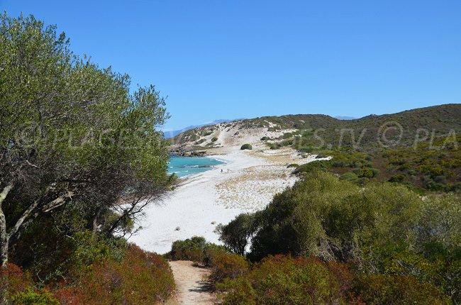 La spiaggia del Ghignu vista dalle paillets - Corsica
