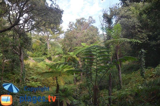 Jardin botanique de Rayol Canadel