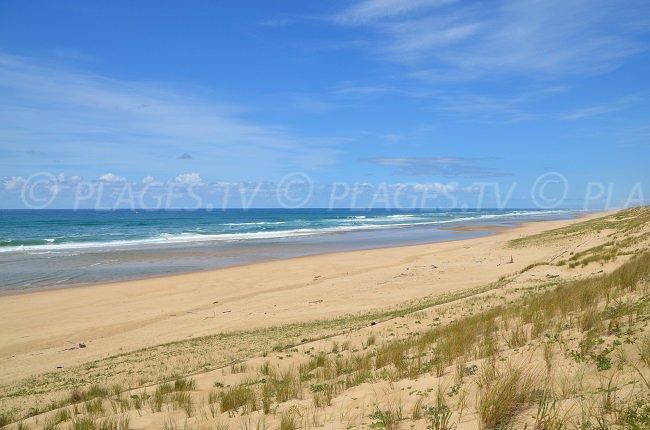 Jenny: une des plages les plus préservées de la Gironde