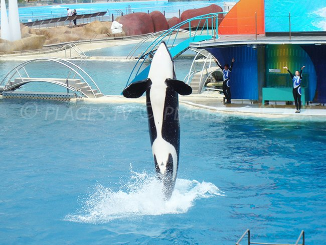 Marineland Antibes et son spectacle d'Orques