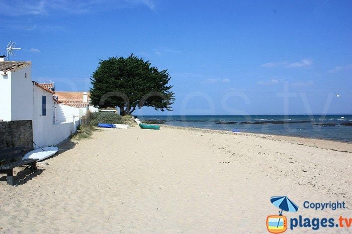 The Vieil Beach on the waterfront - Noirmoutier