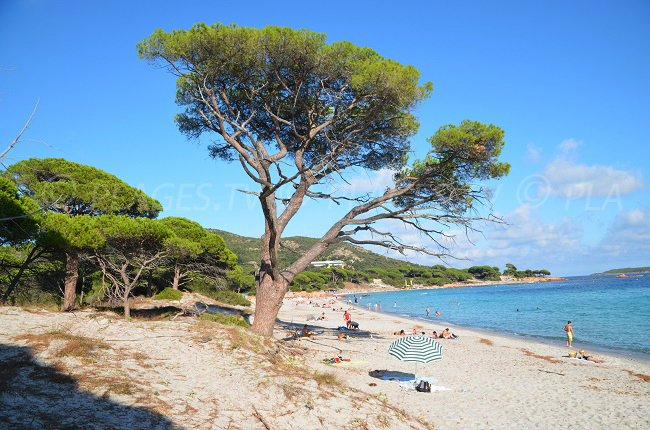 Famous beach of Palombaggia in Corsica