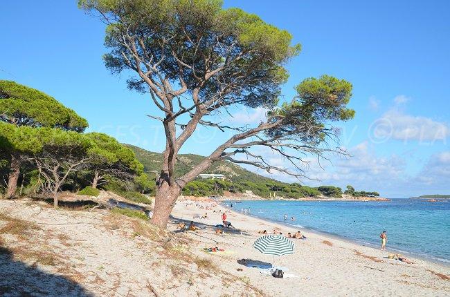 Palombaggia en Corse