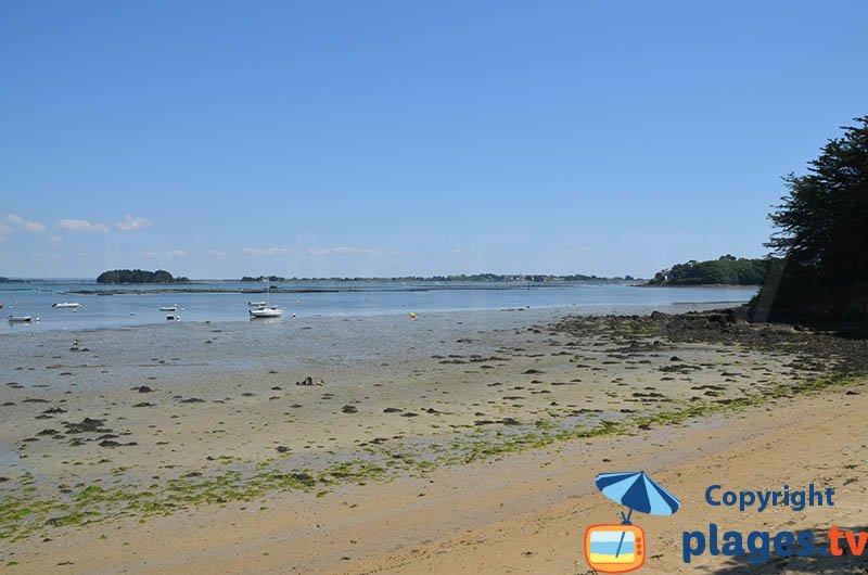 Parc ostréicole dans le golfe du Morbihan