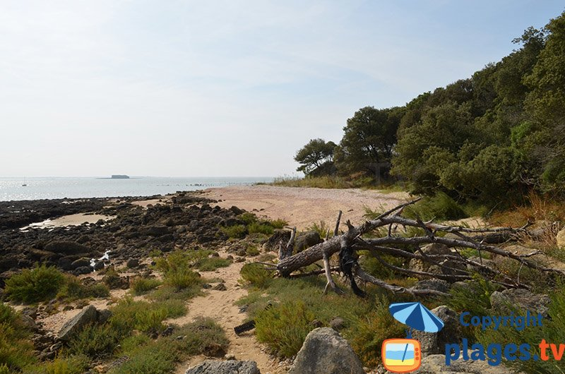 Paysage de l'ile d'Aix du côté des Ormeaux - Batterie de Coudepont
