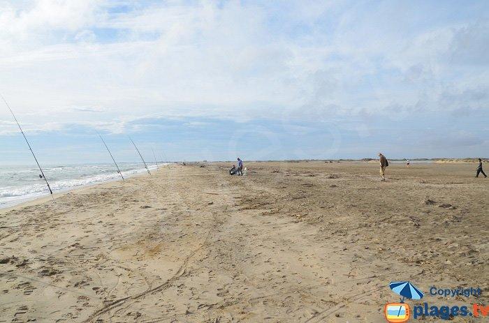 Pêche sur la plage de Piémanson