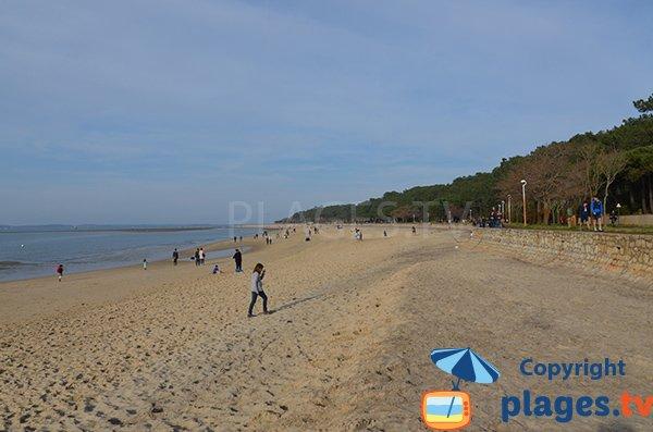 Spiaggia e pineta - Abatilles - Arcachon