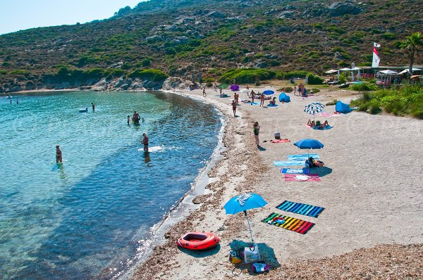 Beautiful beach in Calvi - Alga