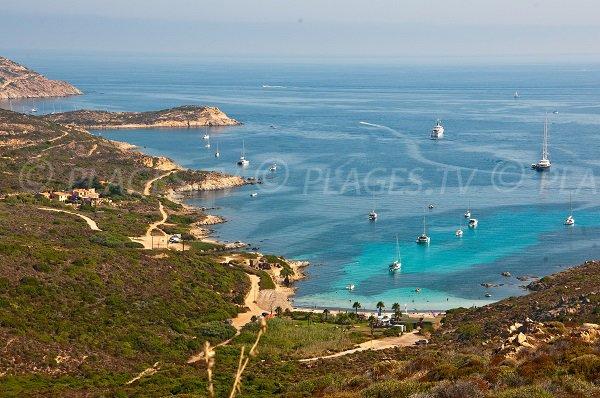 Alga beach in Calvi - Corsica
