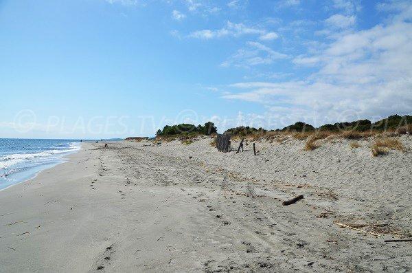 Dune sur la plage d'Alistro Nord