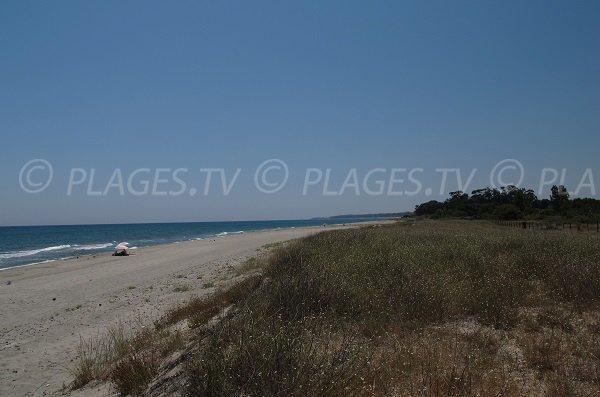 Environnement de la plage d'Alistro - Haute Corse