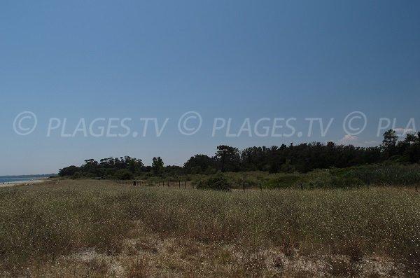 Landscape around the beach of Alistro - San Giuliano