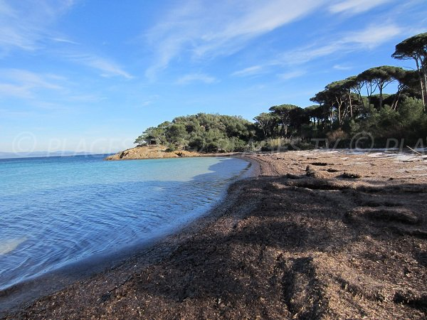 Argent beach on Island of Porquerolles in France