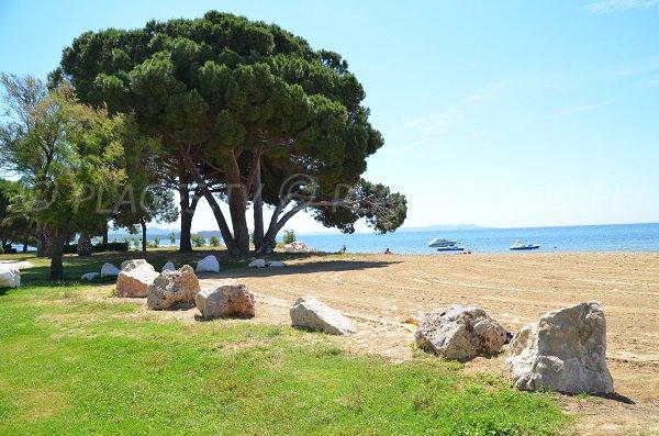 Pelouse et arbres sur la plage de l'Argentière à La Londe