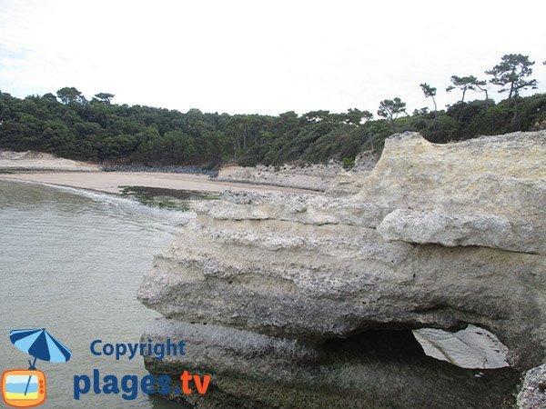 Falaises calcaires de la plage de l'Arnèche - Meschers sur Gironde