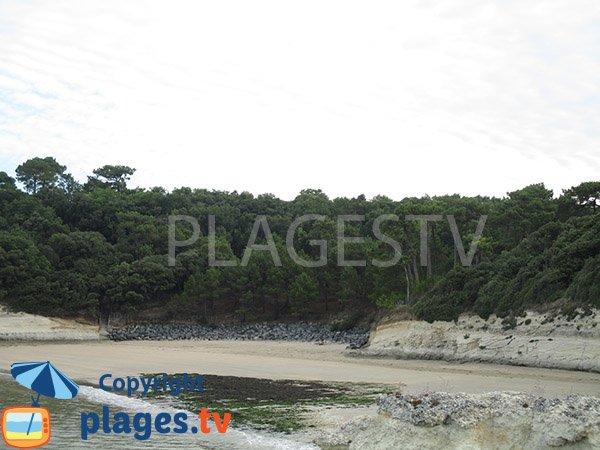 Algues sur la plage des Arnèches - Meschers sur Gironde