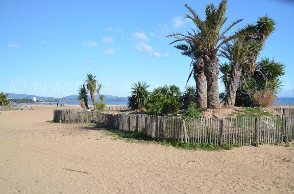 Palmiers sur la plage de l'Ayguade