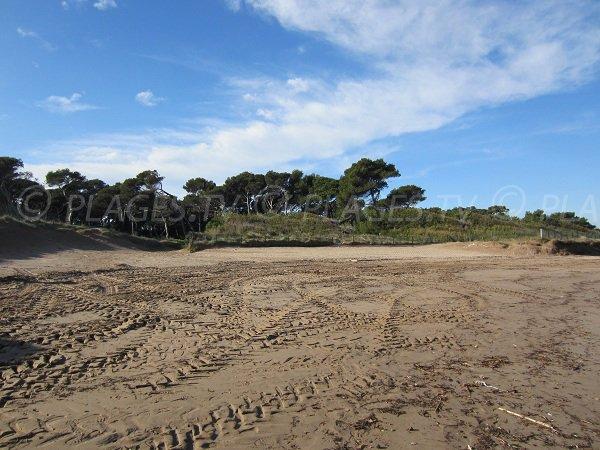Pinède de la plage de la Badine sur la presqu'île de Giens