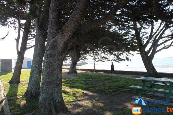 Aire de pique-nique sur la plage de Ste Anne
